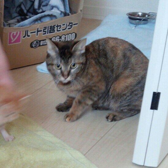 オーダーメイドの木彫ブローチ猫モデル